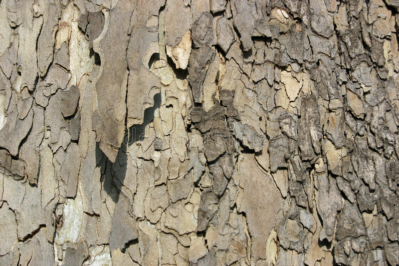 Download Tree Bark stock photo. Image of brown, tree, trunk, close - 22973478