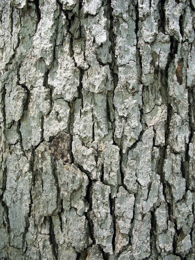Download Tree Bark stock image. Image of trunk, wooden, brown, pine - 5291997