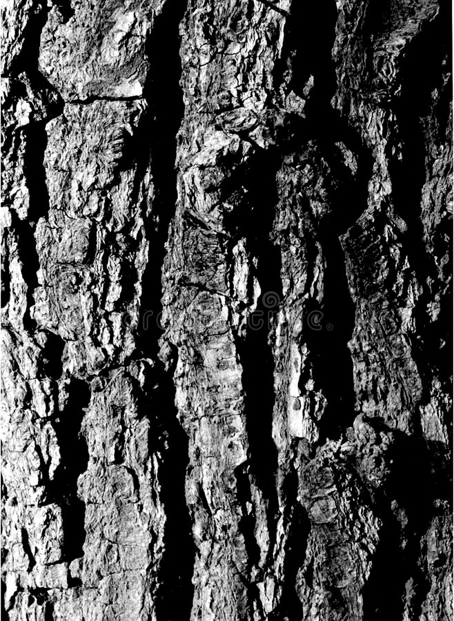 Free Tree Bark Royalty Free Stock Image - 638166