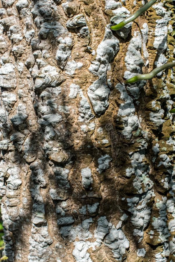 Tree bark abstract. Abstract of close up of green sprouts on tree bark textures royalty free stock photography