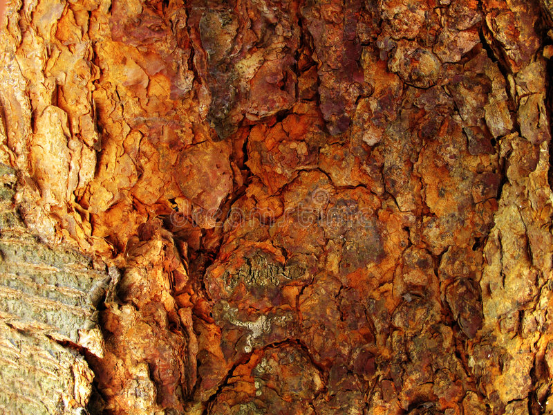 Download Tree Bark Background stock photo. Image of wood, cracked - 8966374