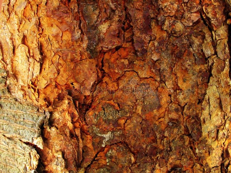 Tree Bark Background stock images