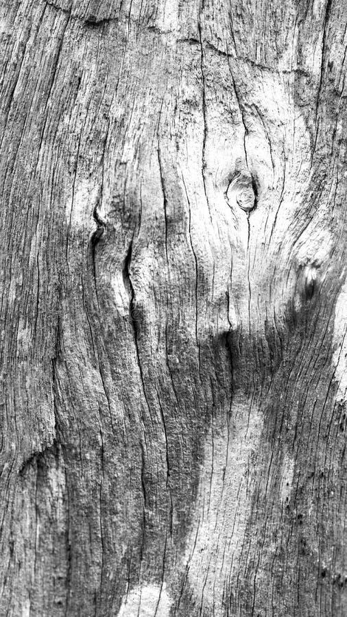Tree Bark Background Black And White stock photo
