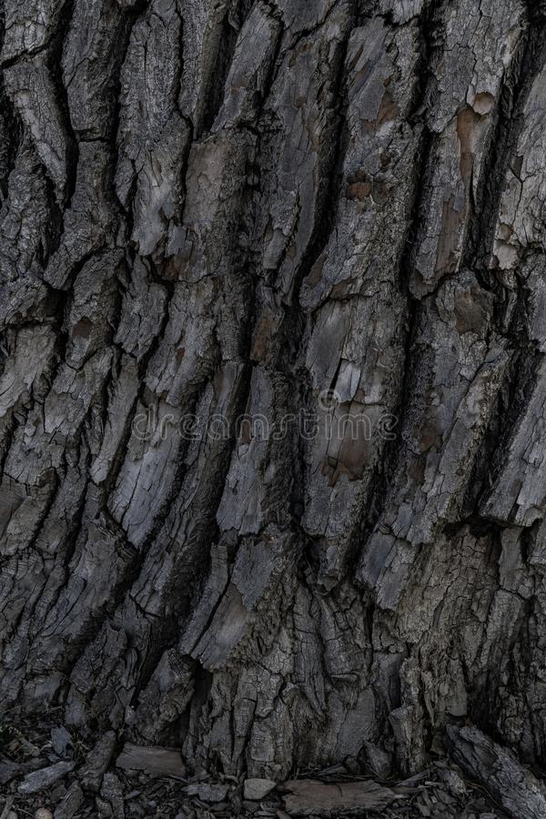 Tree bark background texture royalty free stock images