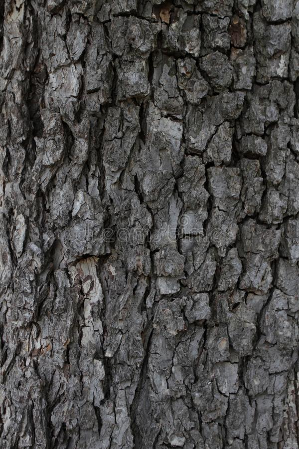 Tree bark background texture. Real wooden tree bark. Dark natural tree bark pattern. Wooden pattern. Real organic wood texture. stock photography