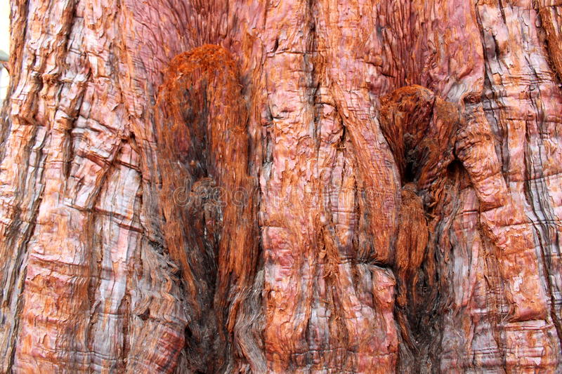 Download Tree Bark Background stock photo. Image of exterior, curved - 32260706