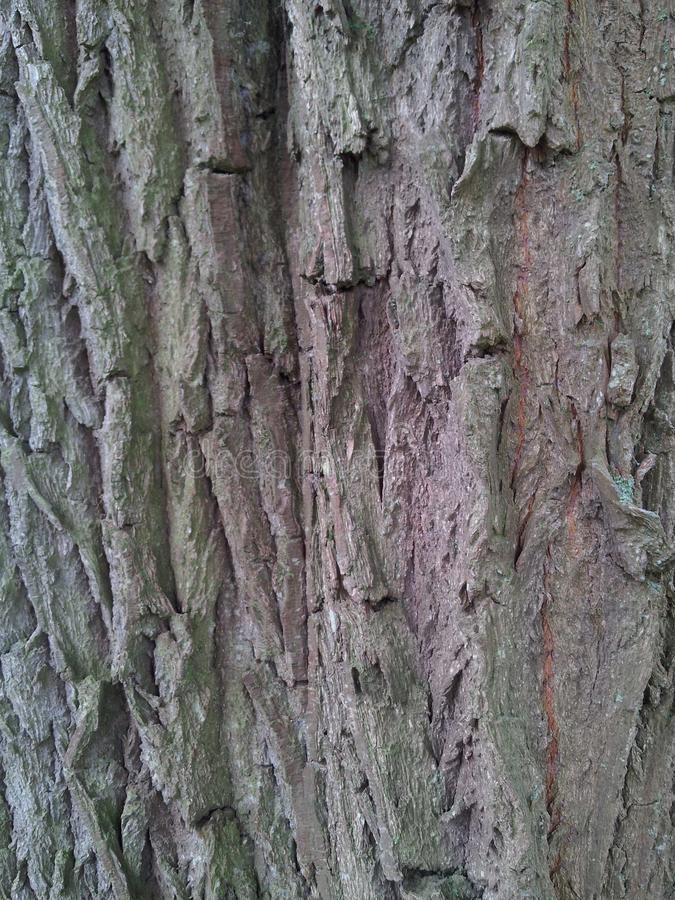 Tree bark brown royalty free stock image