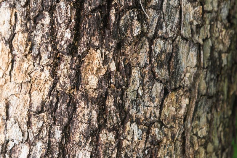 Tree bark of Burmese Padauk. Tree bark of Burmese Padauk used as a background texture stock photos