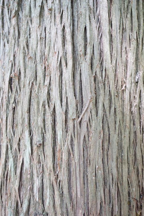 Tree bark stock photography
