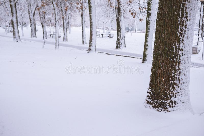 Tree bark close up in the snow. royalty free stock photo