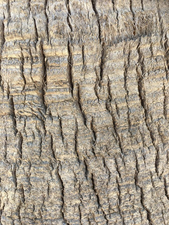 Tree bark closeup of a palm. Textured closeup of tree bark on a palm tree, Spain stock photo