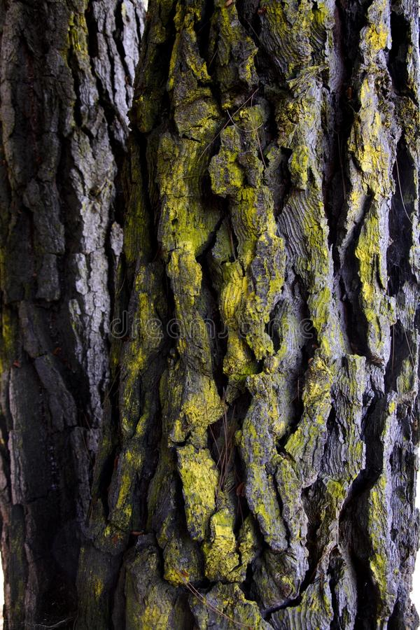 Tree bark covered with lichen stock photos