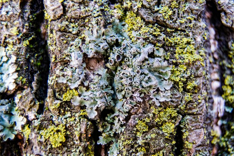 Tree bark covered with moss royalty free stock photo