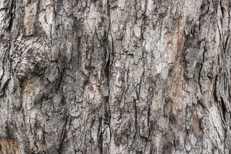 Tree bark. Cracked bark of an old large tree royalty free stock photo