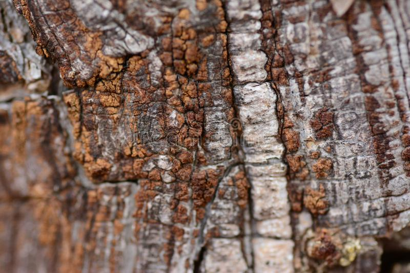 Outfacing the elements. Tree bark defy elements. A dead part protects living being underneath royalty free stock photography