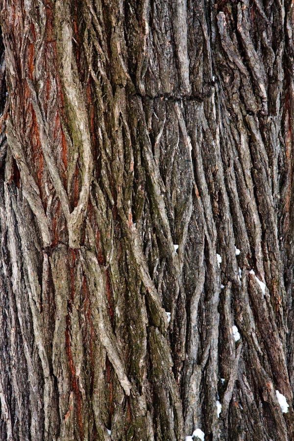 Tree bark detail stock photography