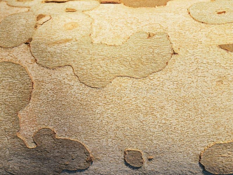 Tree Bark. Detail of a tree bark. stock image