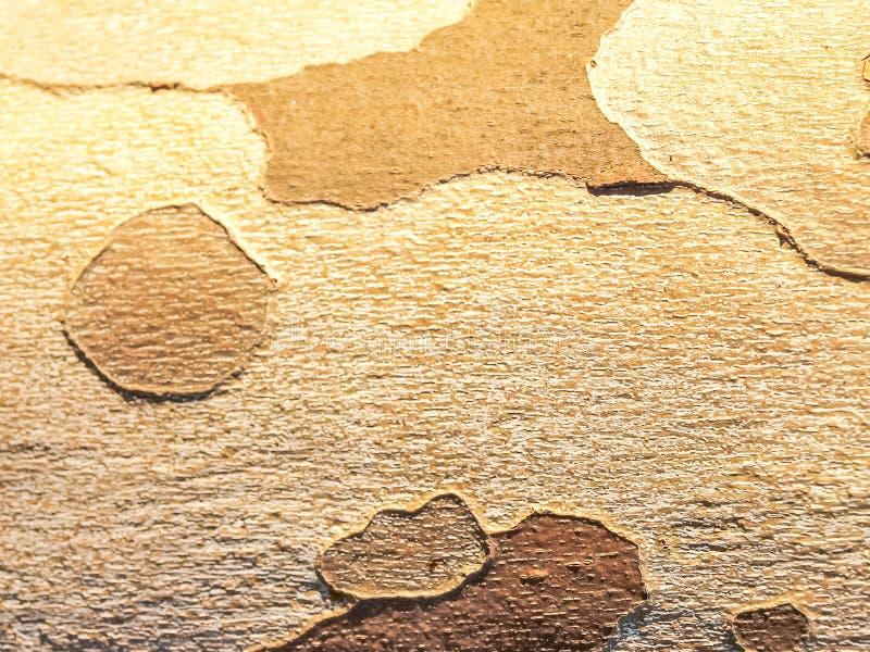 Tree Bark. Detail of a tree bark. royalty free stock photos
