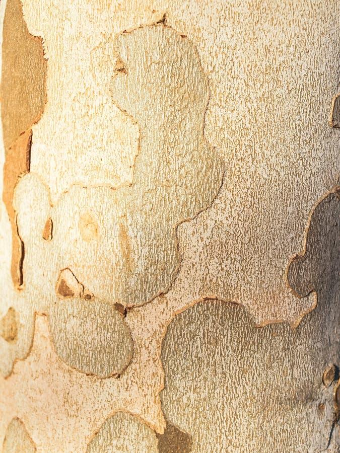Tree Bark. Detail of a tree bark. stock photo