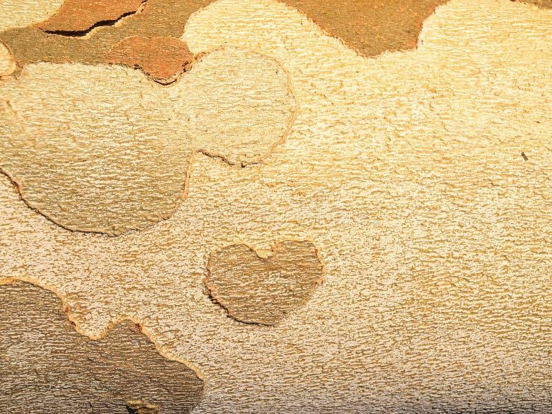 Tree Bark. Detail of a tree bark. stock photos