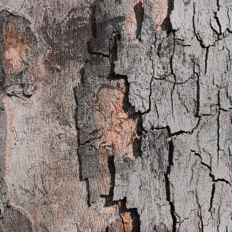 Tree bark digital background stock images