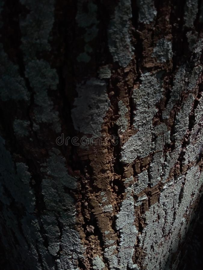 Tree bark in dramatic light. Shadow, details, macro, nature, wallpaper, 2019, summer, season, fall, sprinh royalty free stock photography