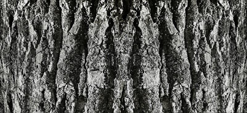 Tree bark embossed volumetric deep crack gray background texture royalty free stock images