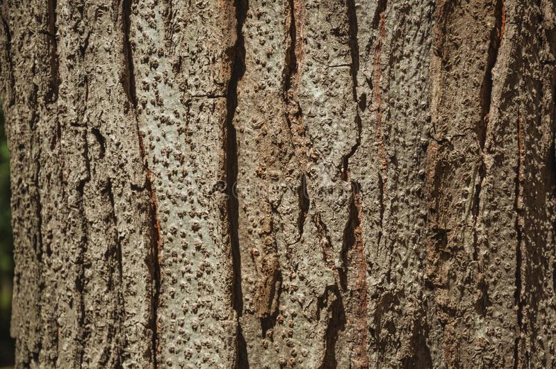 Tree bark forming a singular background in a park of Madrid royalty free stock image