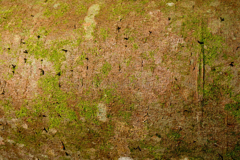 Download Tree bark with with fungus stock photo. Image of natural - 83724490