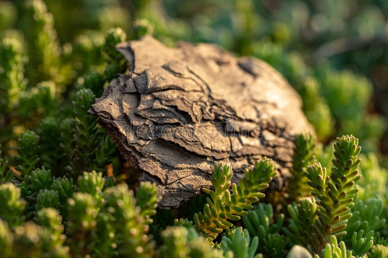 Tree bark on the ground. Mulch wood bark stock images