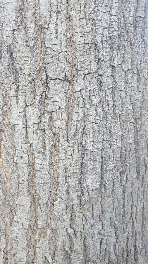 Tree bark. Ideal for different textures. A perfect photo for textures. The bark of a tree in the north of Spain stock photo