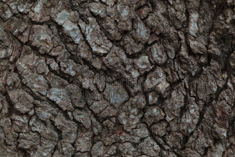 Tree Bark Macro royalty free stock photo