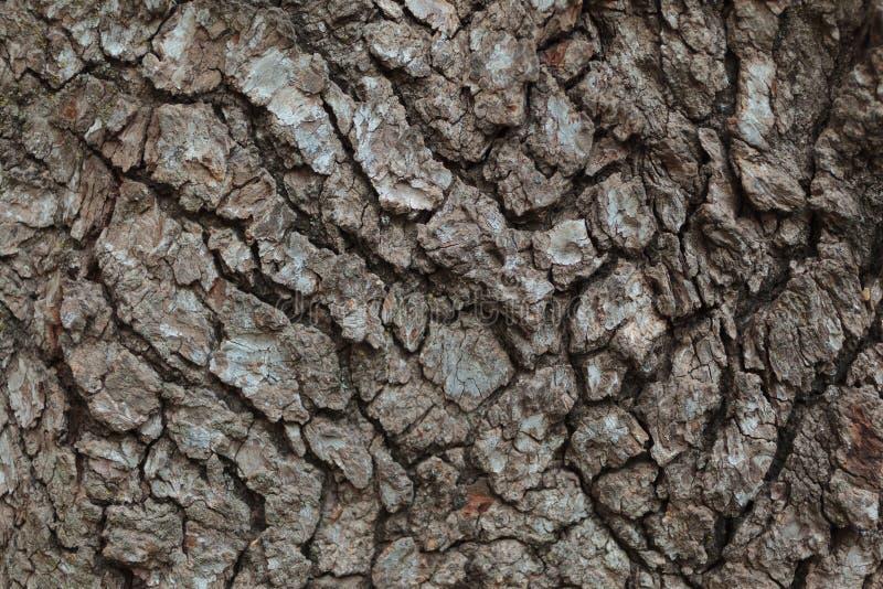 Tree Bark Macro royalty free stock image