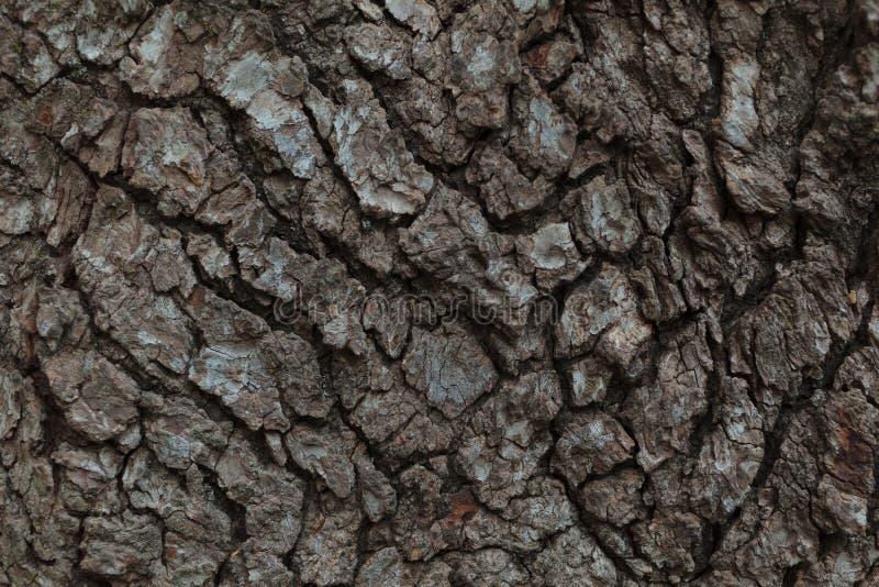 Tree Bark Macro royalty free stock images