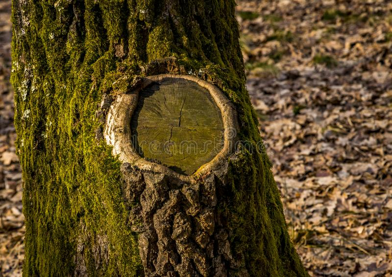 Tree bark and moss royalty free stock images