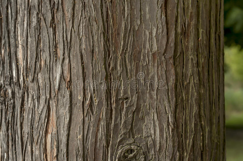 Tree bark. Old tree bark texture or background stock image