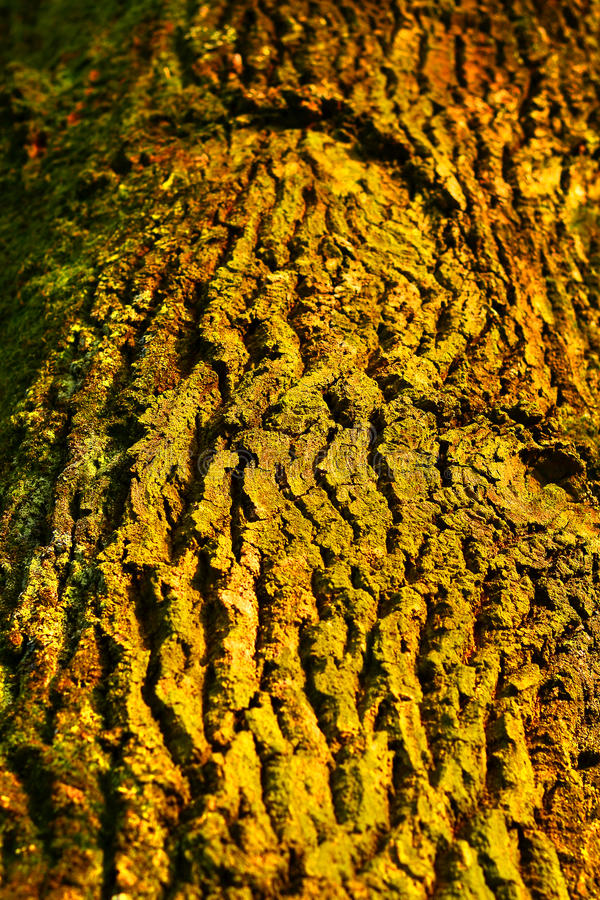 Tree Bark. A photo of tree bark taken in a park in Zagreb, Croatia royalty free stock image