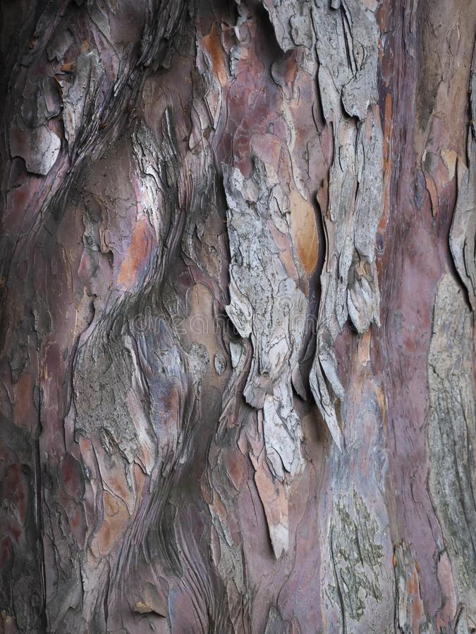A close up of lovely tree bark texture. stock images