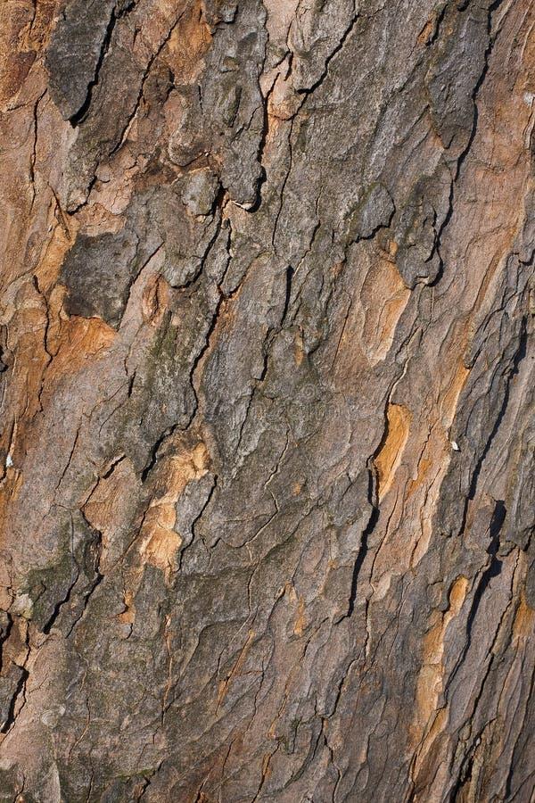 Free Tree Bark Texture Stock Photography - 13346652