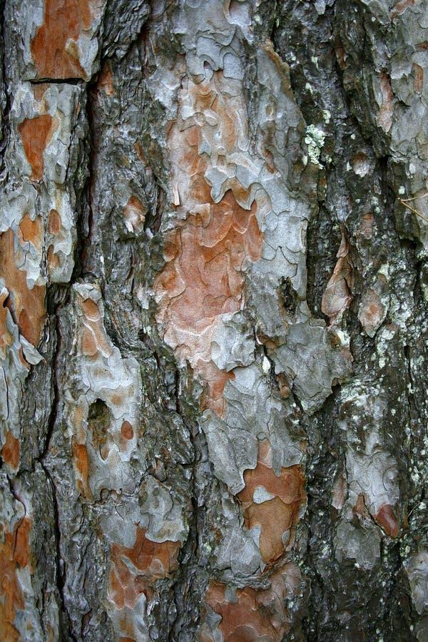 Free Tree Bark Texture Royalty Free Stock Photos - 14133358
