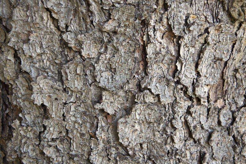 Tree bark texture. Close up of tree bark texture stock photos