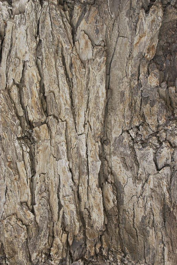 Tree bark texture 2 royalty free stock photos