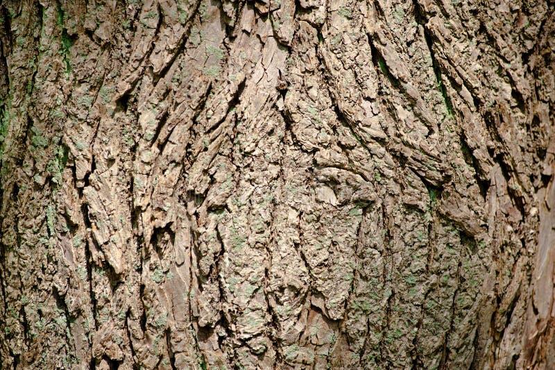 Tree Bark Texture Stock Photos