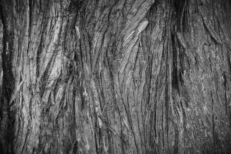 Tree Bark Texture royalty free stock images