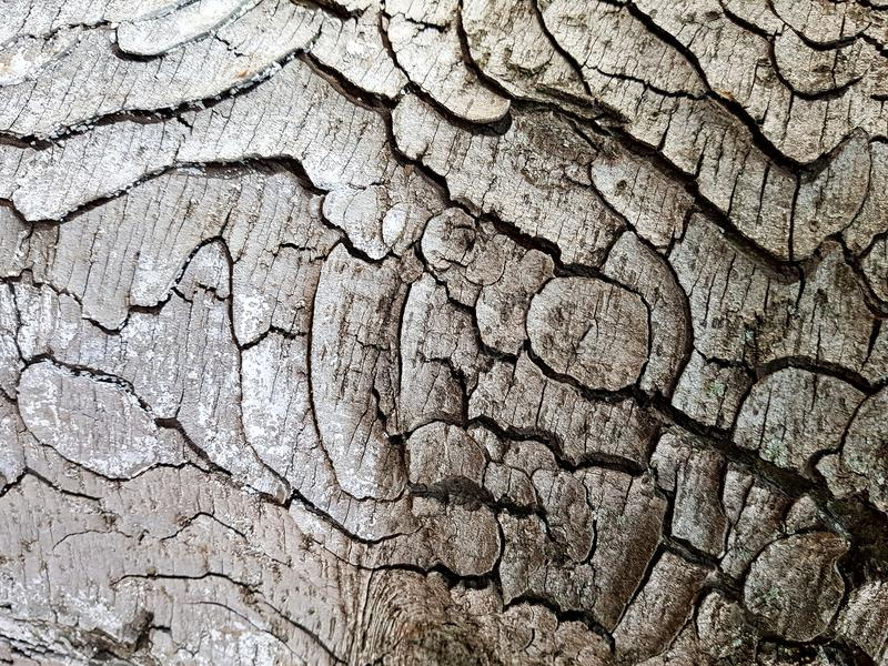 Tree bark texture  background. Texture - a bark of an old oak royalty free stock images