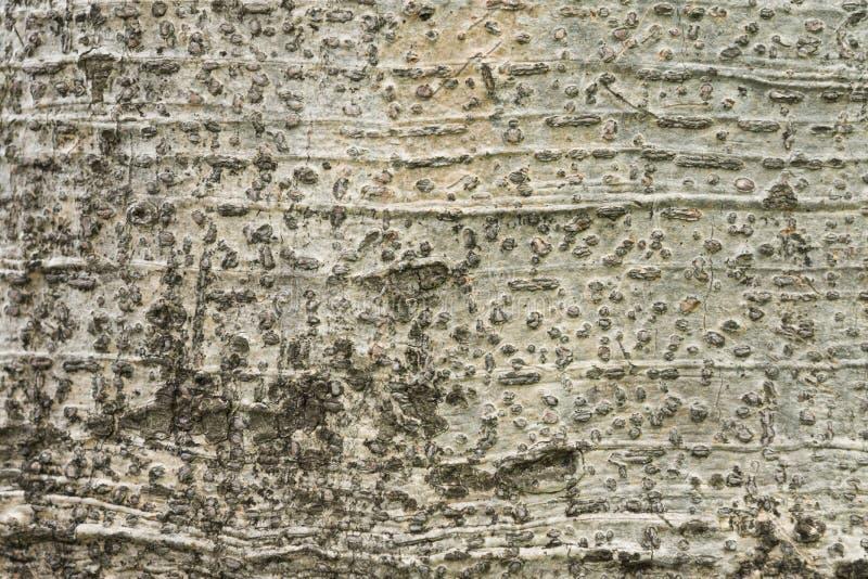 Tree bark texture background stock photography