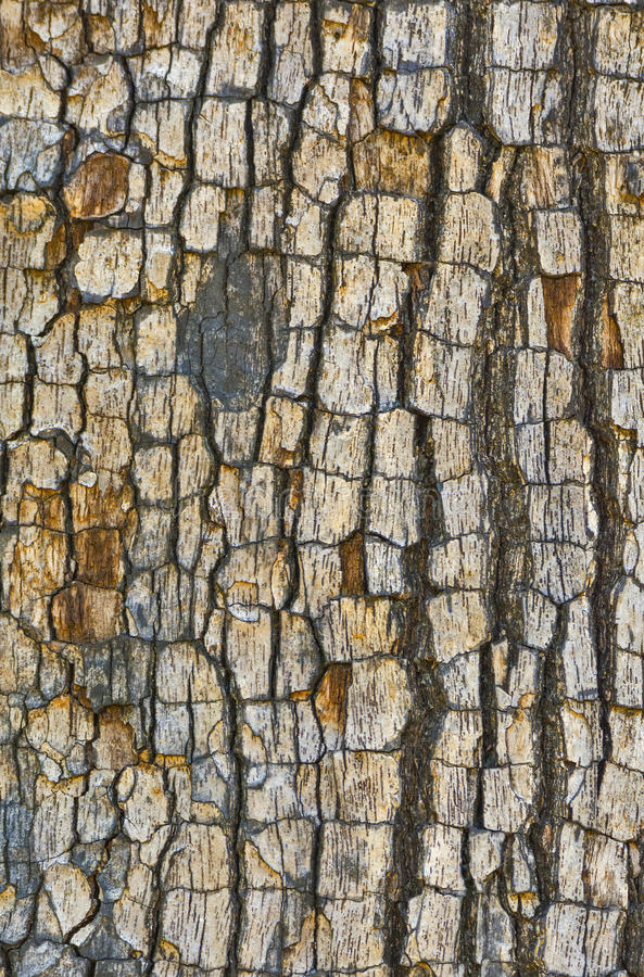 Tree bark texture. Beautiful texture of tree bark royalty free stock image