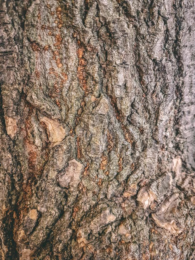 Tree bark texture with highlights and shadows. Tree bark texture with shadows and highlights that make it pop royalty free stock images