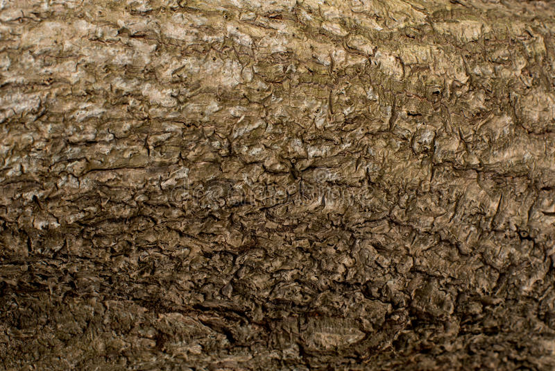 Download Tree bark texture stock photo. Image of background, brown - 83724192