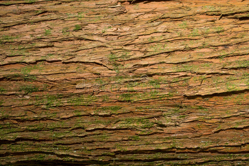 Download Tree bark texture stock image. Image of surface, pine - 83724569